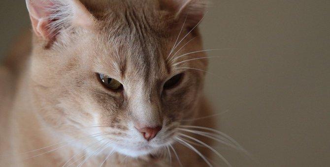 猫が「期待を裏切られた!」とがっかりする事8つ
