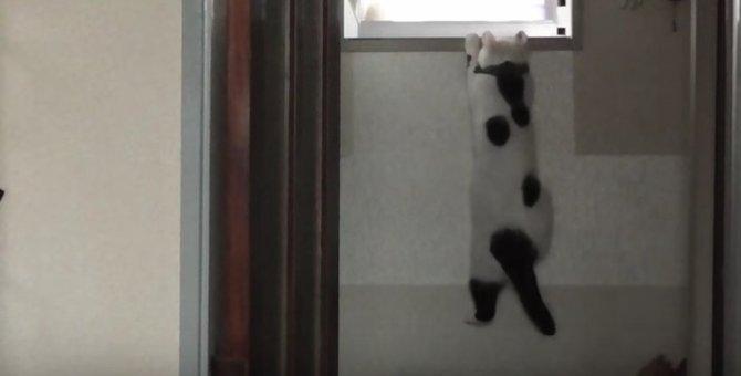 謎の特訓を繰り返す猫が面白い!