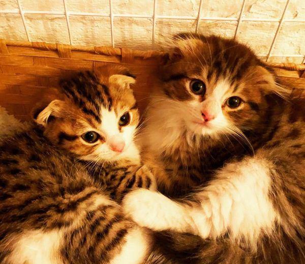猫って実は…飼い主しか知らない手がかかるポイント4選
