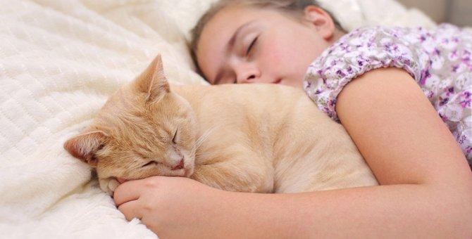 猫が心を許した人の前でする『寝方』3つ