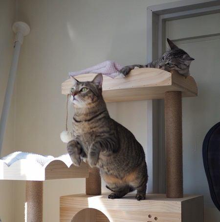 猫のスゴイ身体能力4つ