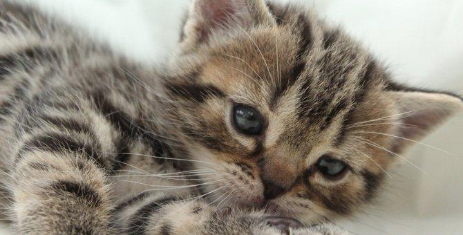 猫が『スキンシップ不足』な時のサイン3つ