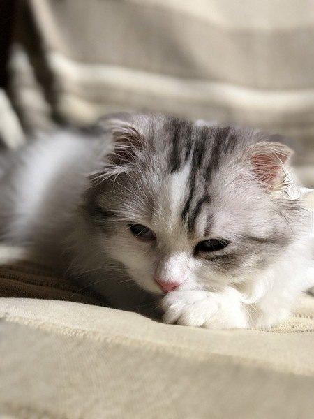 もしかしたらあなたも?猫の気持ちがわかる『キャットウィスパラー』とは