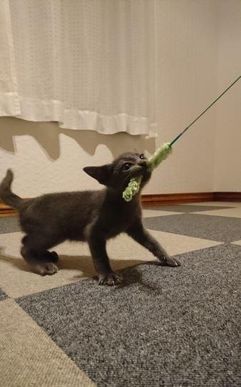 元気な子猫とシニア猫を一緒に飼うコツ5つ