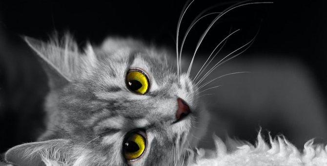 亡くなった愛猫を悲しませないで!飼い主がしてはいけないこと4つ