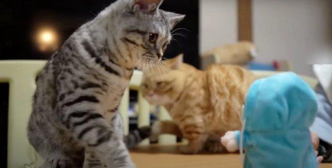 喋る人形に戸惑う猫ちゃんのリアクションが可愛い♡