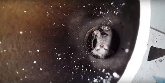配管の中に子猫が落ちちゃった!?決死の救出劇を目撃せよ