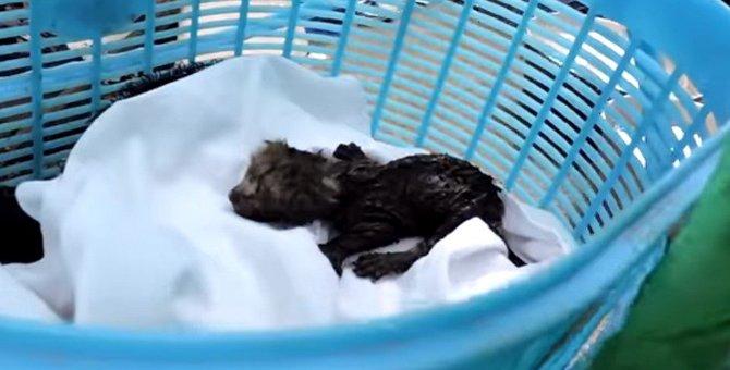 排気ダクトに閉じ込められてる!生まれたばかりの子猫たちの救出劇