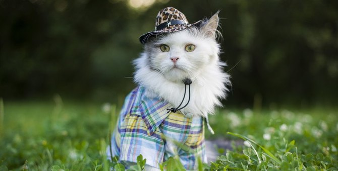 猫用品はどこで買う?おしゃれなブランドや通販サイト、おすすめ商品まで