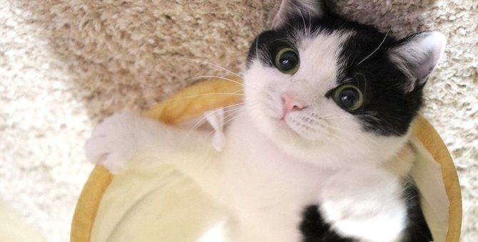 猫の『眉毛』が持つ大切な役割3つ