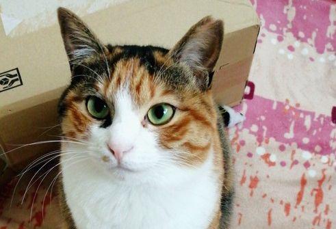猫の飼い主をメロメロにする『あざとい』行動5つ