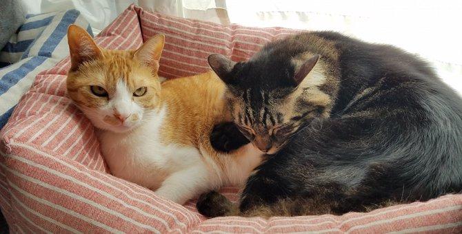 100円ショップの座布団で『猫ベッド』を作ってみよう