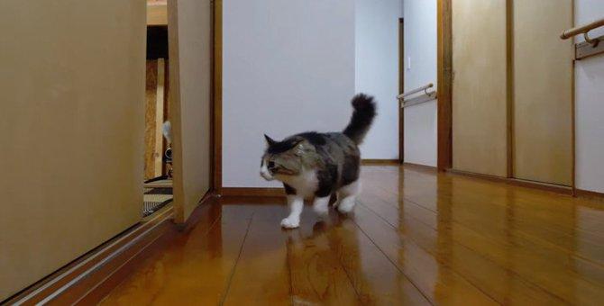 扉を破壊した猫ちゃんのその後