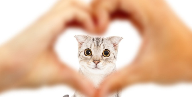 猫はこんな人が好き!好かれるために大事な2つの事