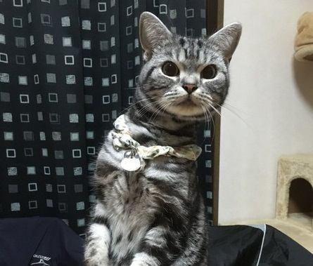 なにしてるの?猫が不思議に思う飼い主の行動6つ