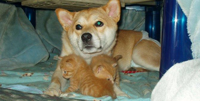 お願い!猫を捨てないで!愛犬の散歩中に出会った土嚢袋に入れられた子猫たち