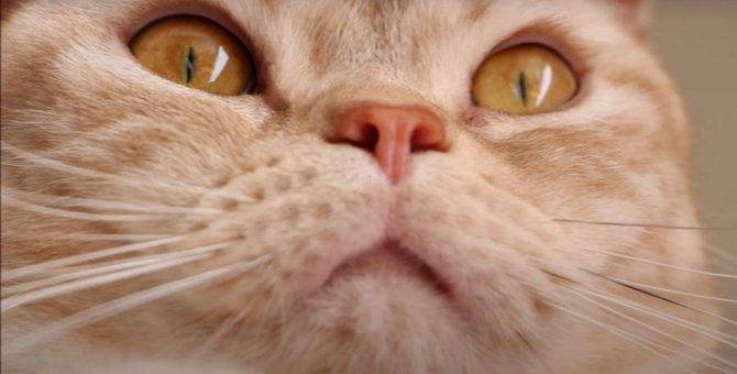 猫ちゃんの可愛い顔面ドアップ♡