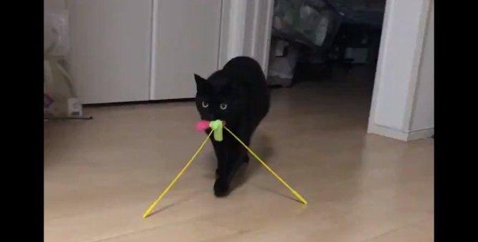 遊ぶ気120%の猫さんが可愛すぎるとツイッター民メロメロ♡