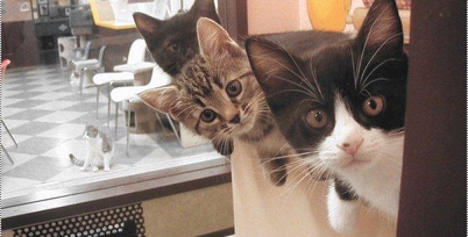 池袋の猫カフェ!激戦区におけるオススメのお店5選