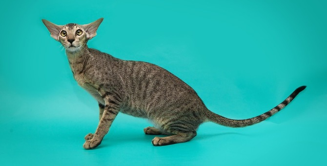 猫が痩せすぎる7つの原因と考えられる病気と危険のサイン