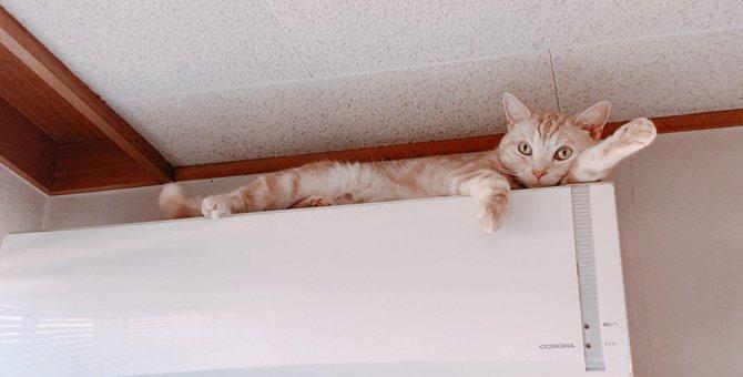 猫が飼い主を見下ろしているときの気持ち5つ