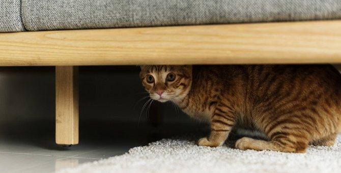 あるある?猫が思わず入っちゃう『家具』7選