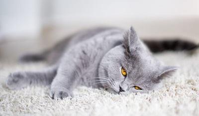 猫の名前を呼んでも無視される『8つの理由』