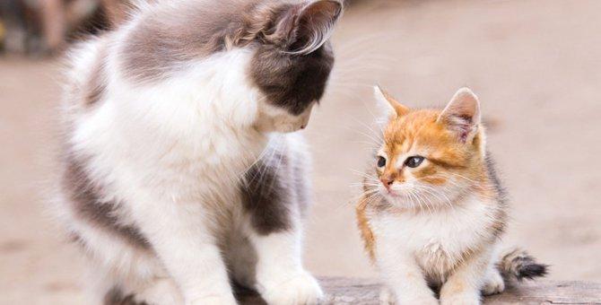 他の猫と仲良くできない猫への対処法
