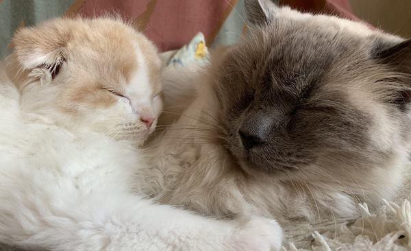 猫が飼い主の腕に抱きつくときの心理4つ