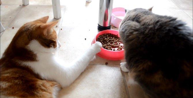 慎重に、確実に…バレないようにそーっとごはんを自分に引き寄せる猫