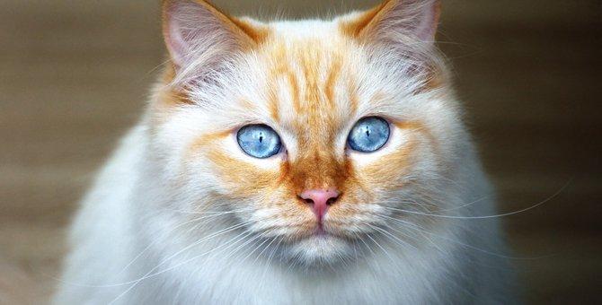 猫の目の色について