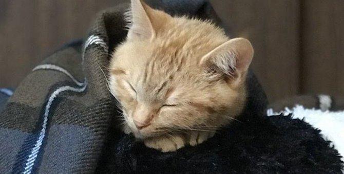 猫の寝姿でわかる『安心度』!5つの項目を今すぐチェックしてみて♡