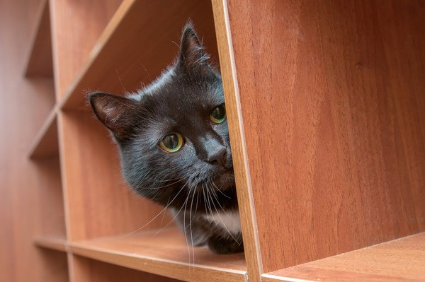 猫が『ひょっこり♡』6つのシチュエーション