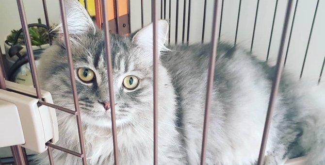超絶イケメンの猫は魔法使いだった!|LAYLAのペットリーディング
