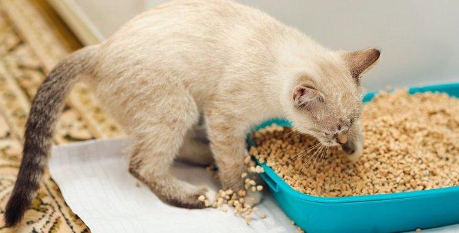 猫のトイレ掃除でよくある悩みは?ねこちゃんホンポが教える解決法!