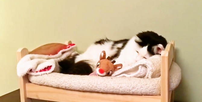 人間みたいな寝姿がかわいい!自分でベッドを整えて寝る猫さん
