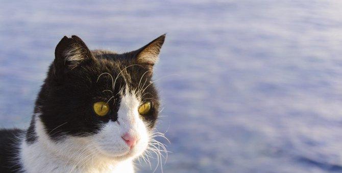 北海道に住む猫の特徴7つ