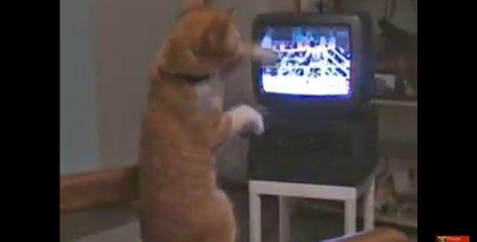 「それ!そこだにゃ!」ボクシングが好き過ぎて身体が勝手に動いてしまう猫ちゃん