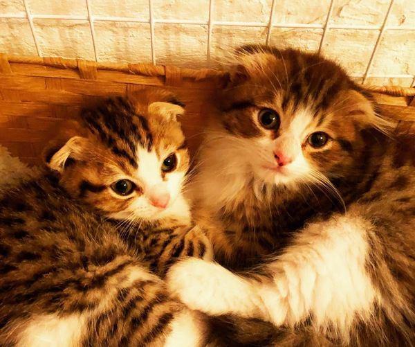 元気あり過ぎ!猫が『やんちゃ期』にする激しい行動3つ