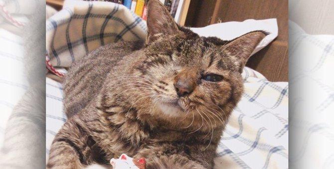猫エイズ、緑内障、脳腫瘍、てんかん…難病もちの保護猫は幸せになれる?