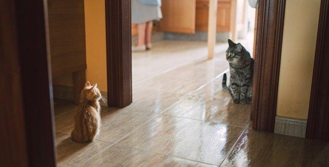 多頭飼い猫はお互いを忘れる事がある?どんな時に忘れてしまうの?