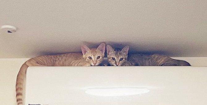 新作夏モデル?エアコンの上に鎮座する子猫達にキュン死のネット民続出!