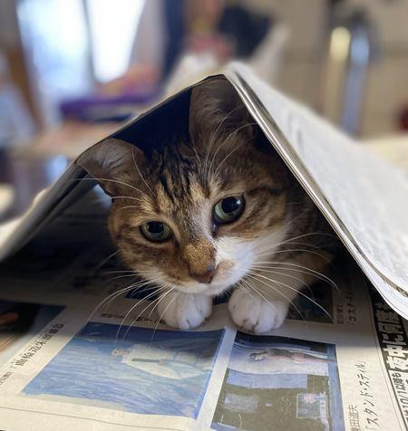 猫が『飼い主から離れたくない!』と思っている時の仕草3つ