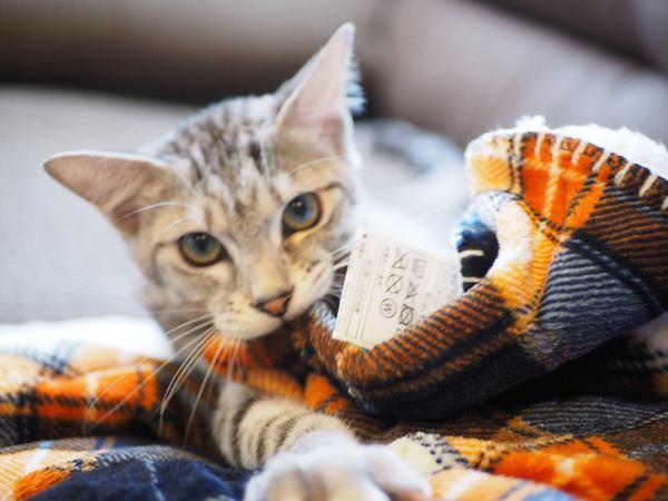 猫が『ふみふみ』する時の3つの条件