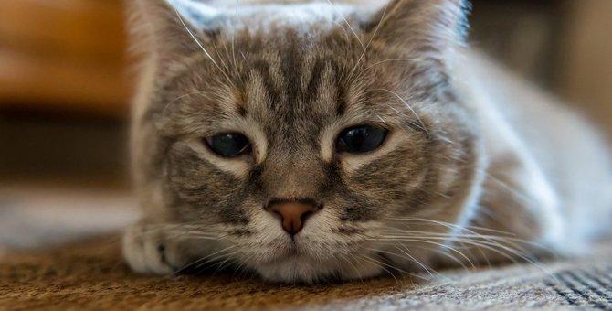 猫が飼い主の『愛情に飢えているとき』にする行動5選