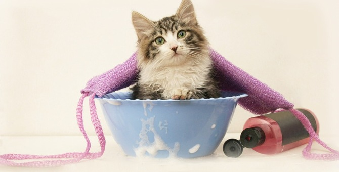 猫のシャンプーをしてくれるお店特集!料金やサービスの内容