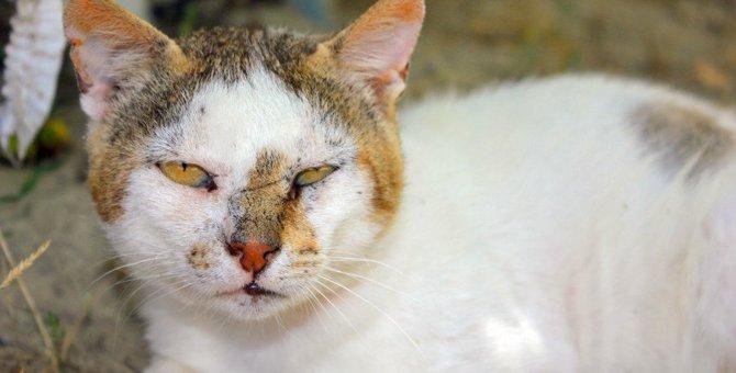 猫が飼い主を下にみているときにする行動8つ
