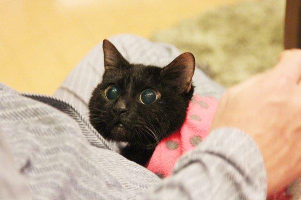 「それでも人を信じた猫 黒猫みつきの180日」作者の咲 セリさんにインタビュー