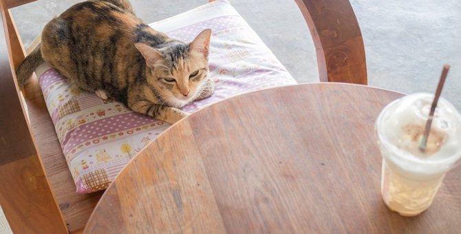 久留米の猫カフェおすすめ2選!保護活動をしているお店もご紹介