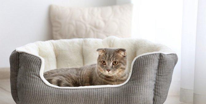 猫の安眠を妨げるベッドの問題点と解決策5つ